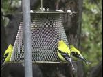 No-No Brass Bird Feeder