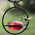 Couronne Company Sphere Hummingbird Bird Feeder