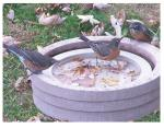 Songbird Essentials Bird Bath Raft