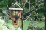 Birds Choice Single Suet Cake Tail Prop Bird Feeder with Hanging Cable